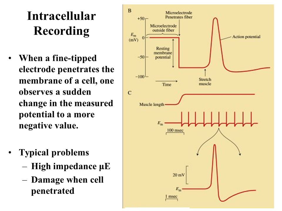 Intracellular Recording
