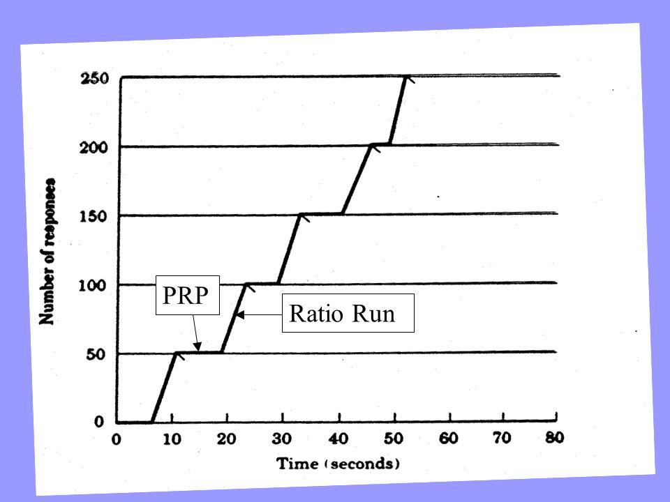 PRP Ratio Run