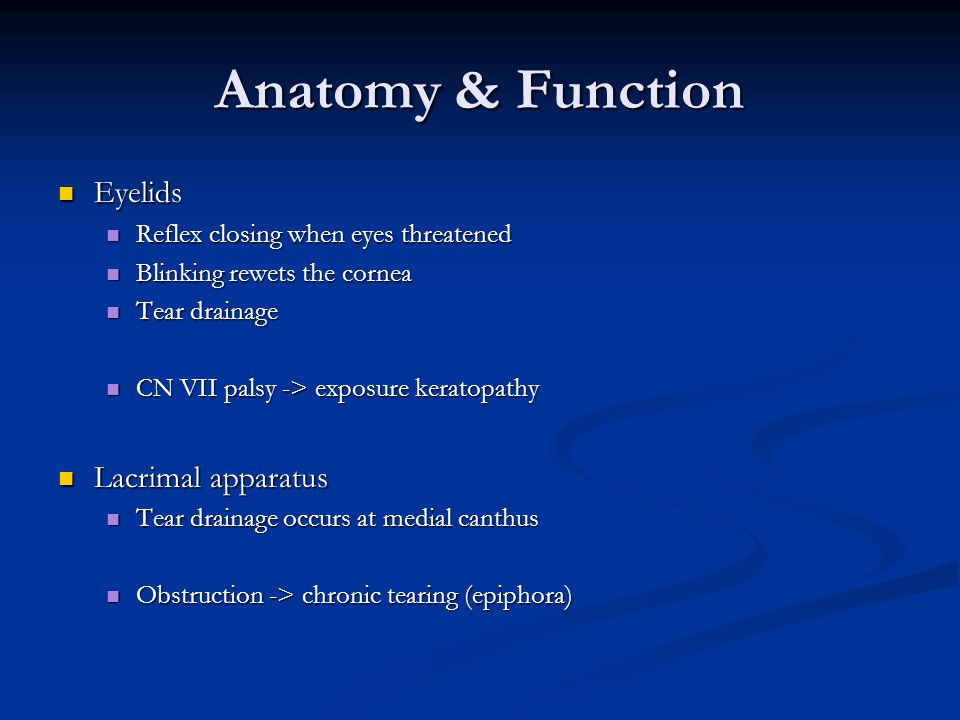 Anatomy & Function Eyelids Lacrimal apparatus