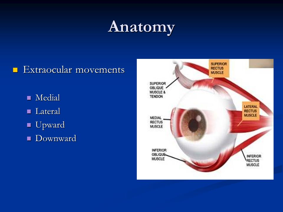 Anatomy Extraocular movements Medial Lateral Upward Downward