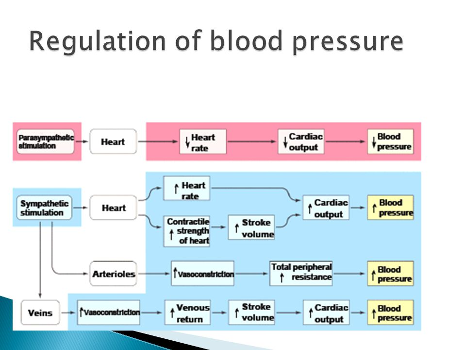 arterial blood pressure1 ppt video online download