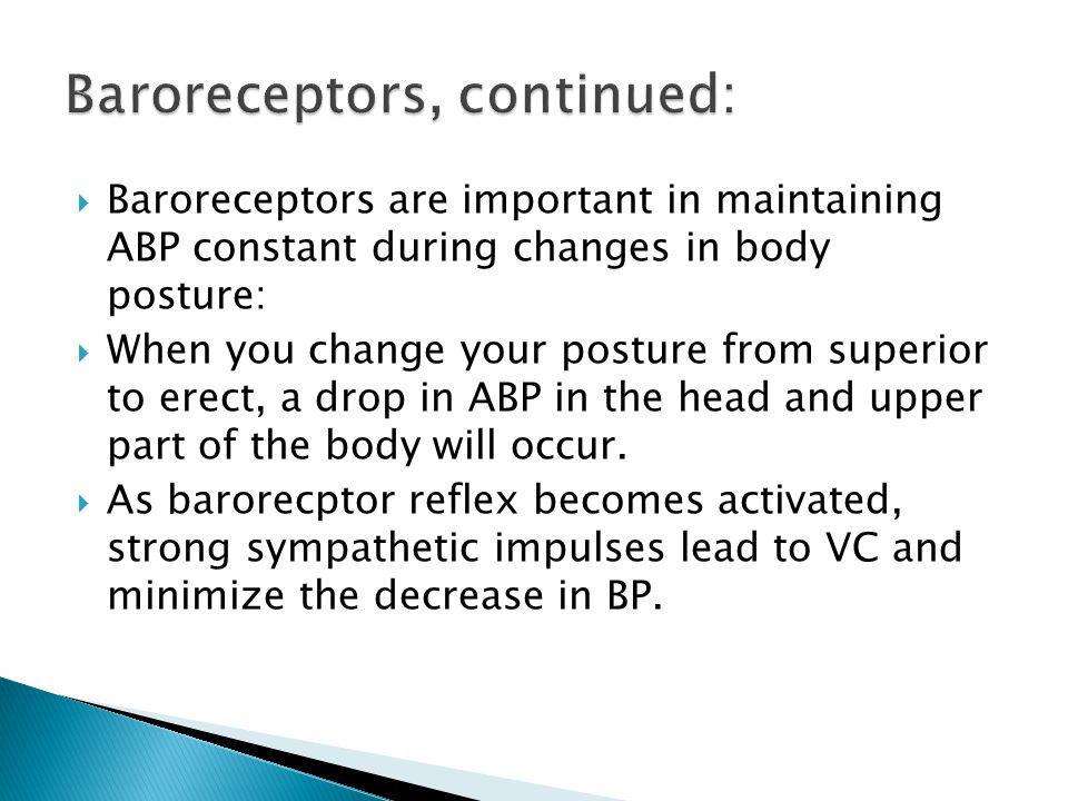 Baroreceptors, continued: