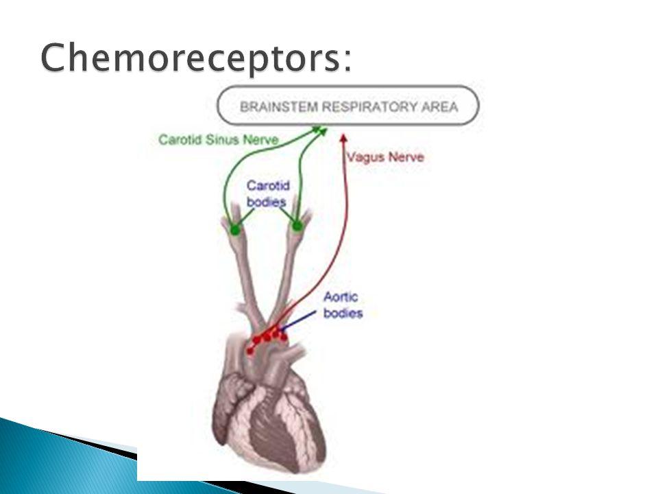 Chemoreceptors: