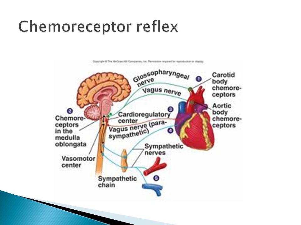 Chemoreceptor reflex