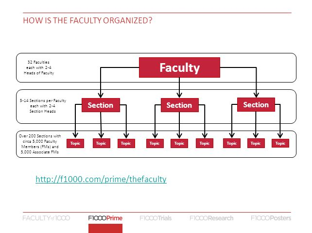 How is the Faculty organized