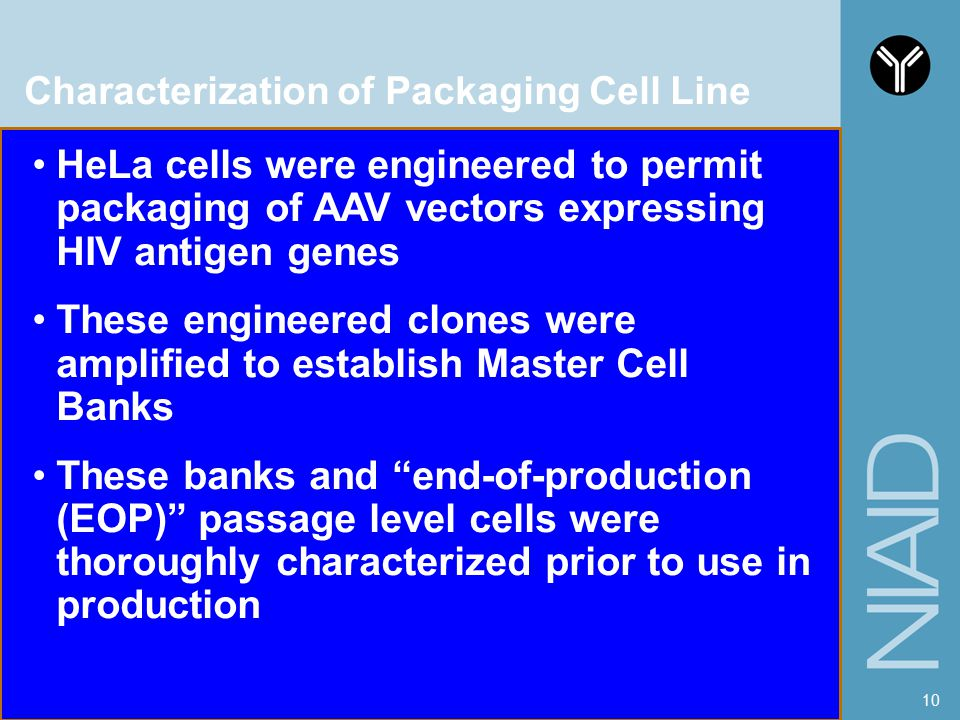 Characterization of Packaging Cell Line