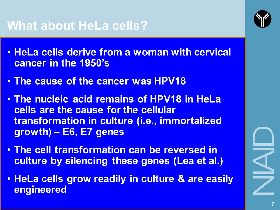 What about HeLa cells HeLa cells derive from a woman with cervical cancer in the 1950's. The cause of the cancer was HPV18.