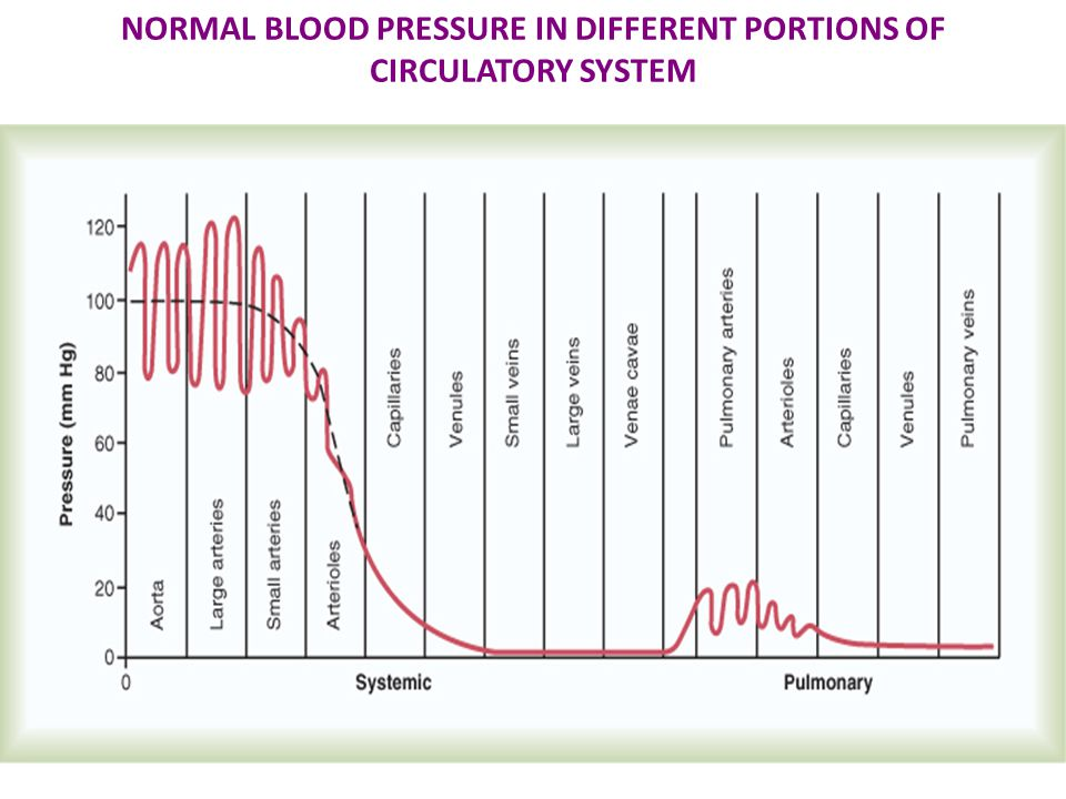 NORMAL BLOOD PRESSURE IN DIFFERENT PORTIONS OF CIRCULATORY SYSTEM