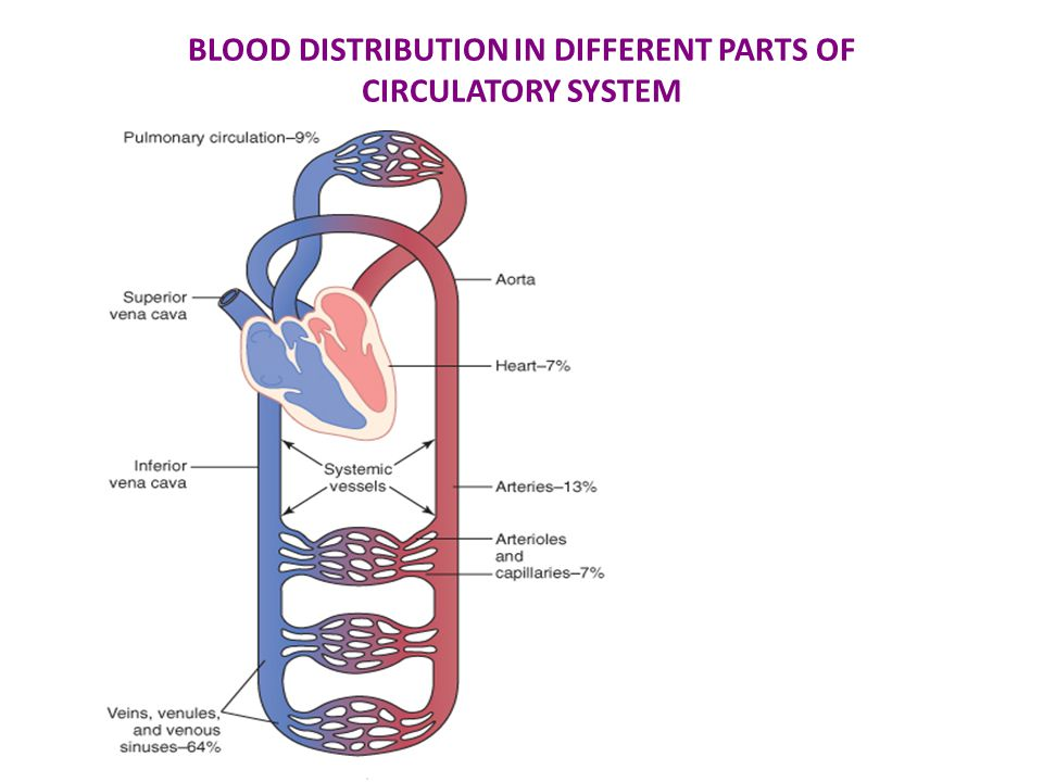BLOOD DISTRIBUTION IN DIFFERENT PARTS OF CIRCULATORY SYSTEM