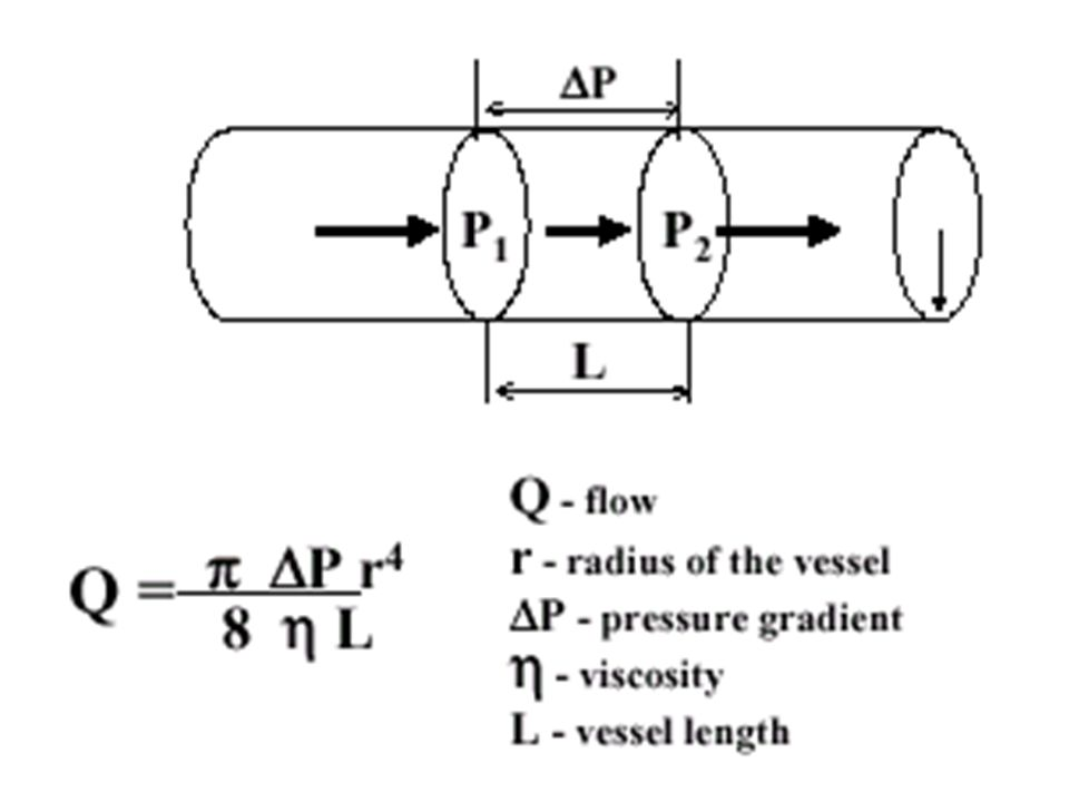 Rate of blood flow  4 th power of the radius