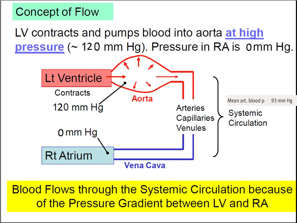 The aorta and large arteries recoil between ventricular con-tractions, continuing the flow of blood to the periphery