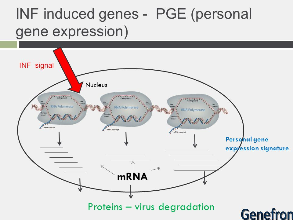 INF induced genes - PGE (personal gene expression)