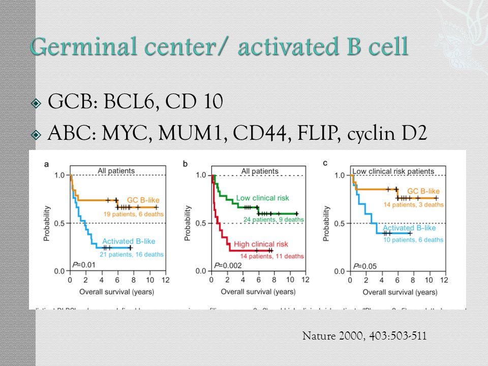 Germinal center/ activated B cell