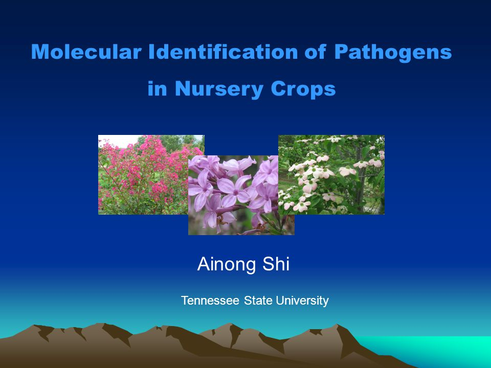 Molecular Identification of Pathogens in Nursery Crops