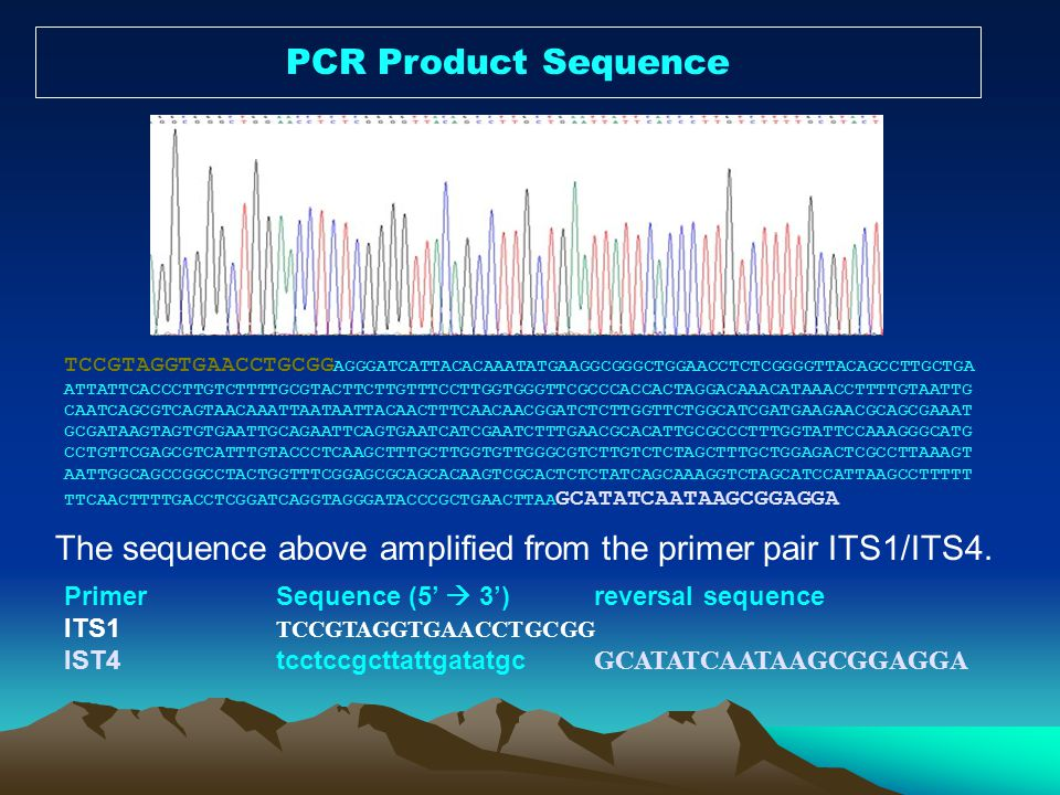 PCR Product Sequence