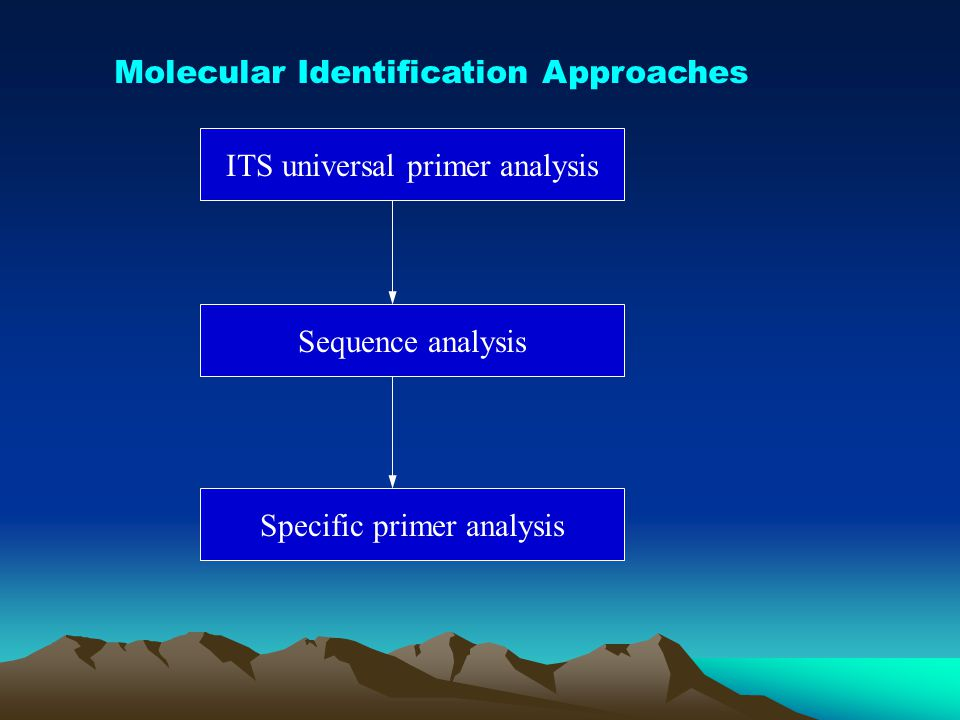 Molecular Identification Approaches