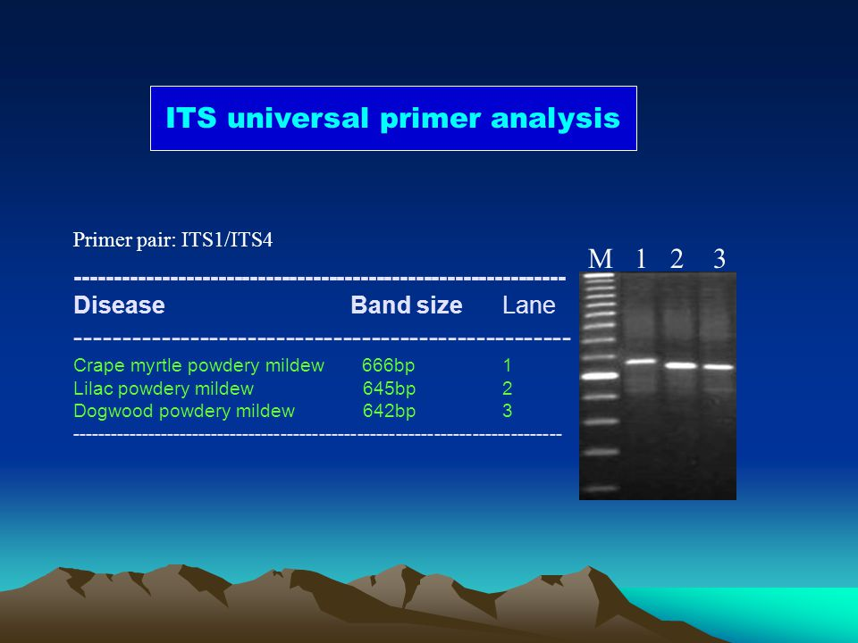 ITS universal primer analysis