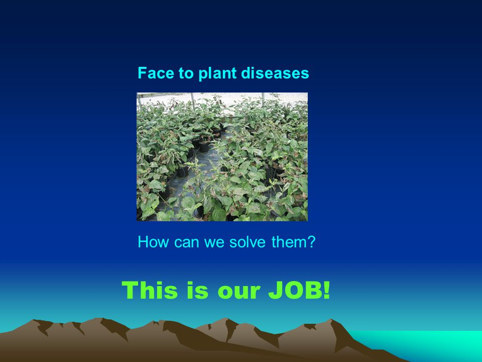 Face to plant diseases How can we solve them This is our JOB!