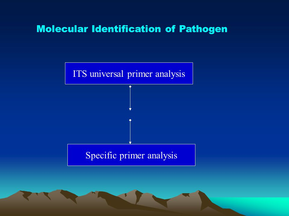 Molecular Identification of Pathogen