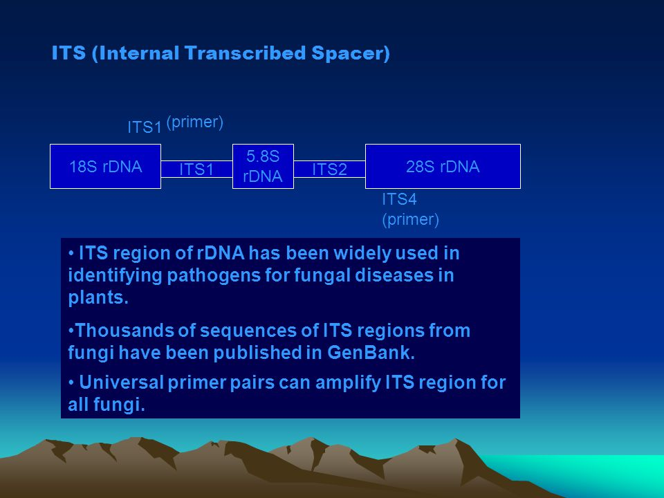 ITS (Internal Transcribed Spacer)