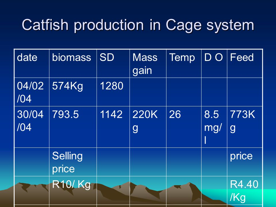 Catfish production in Cage system