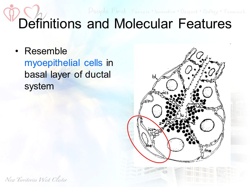 Definitions and Molecular Features