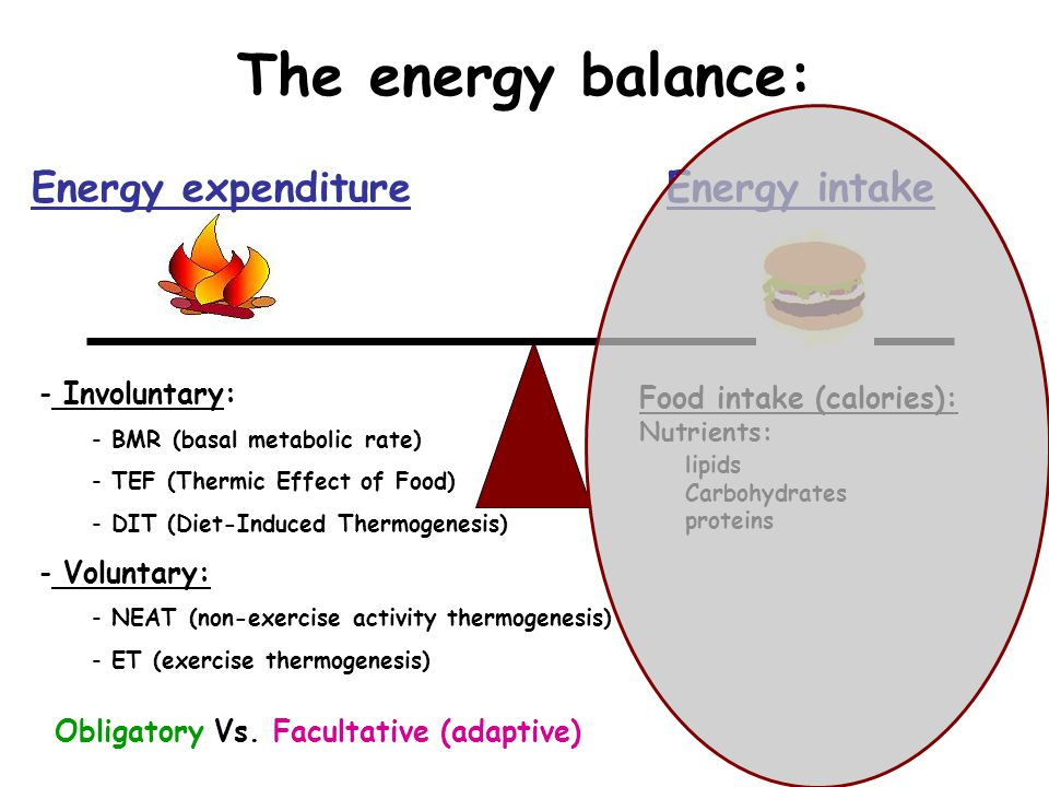 The energy balance: Energy expenditure Energy intake Involuntary: