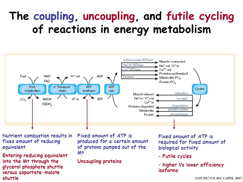 The coupling, uncoupling, and futile cycling of reactions in energy metabolism