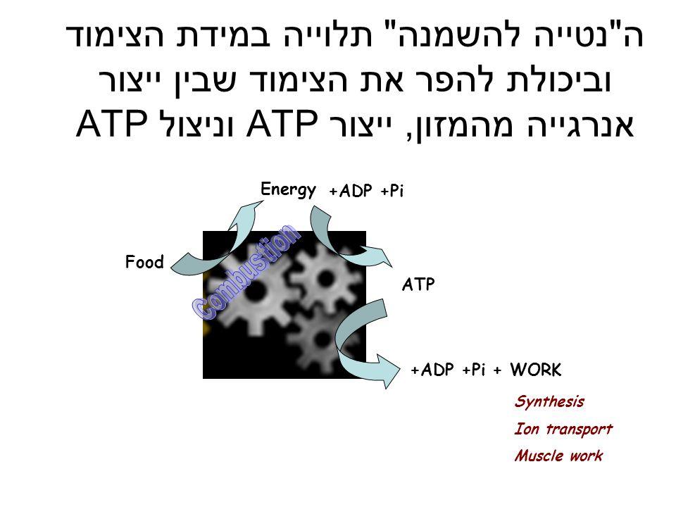 ה נטייה להשמנה תלוייה במידת הצימוד וביכולת להפר את הצימוד שבין ייצור אנרגייה מהמזון, ייצור ATP וניצול ATP
