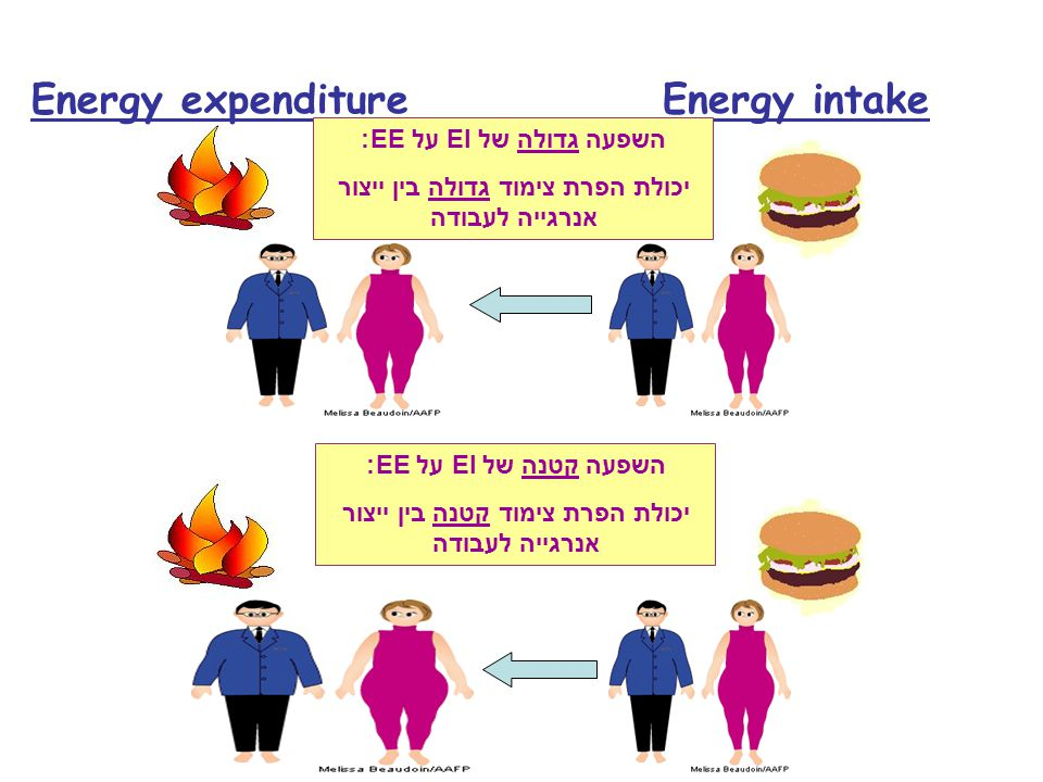 Energy expenditure Energy intake השפעה גדולה של EI על EE: