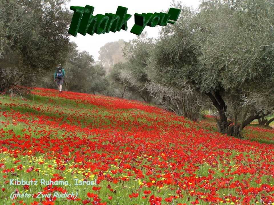 Thank you ! Kibbutz Ruhama, Israel (photo: Zvia Rudich)
