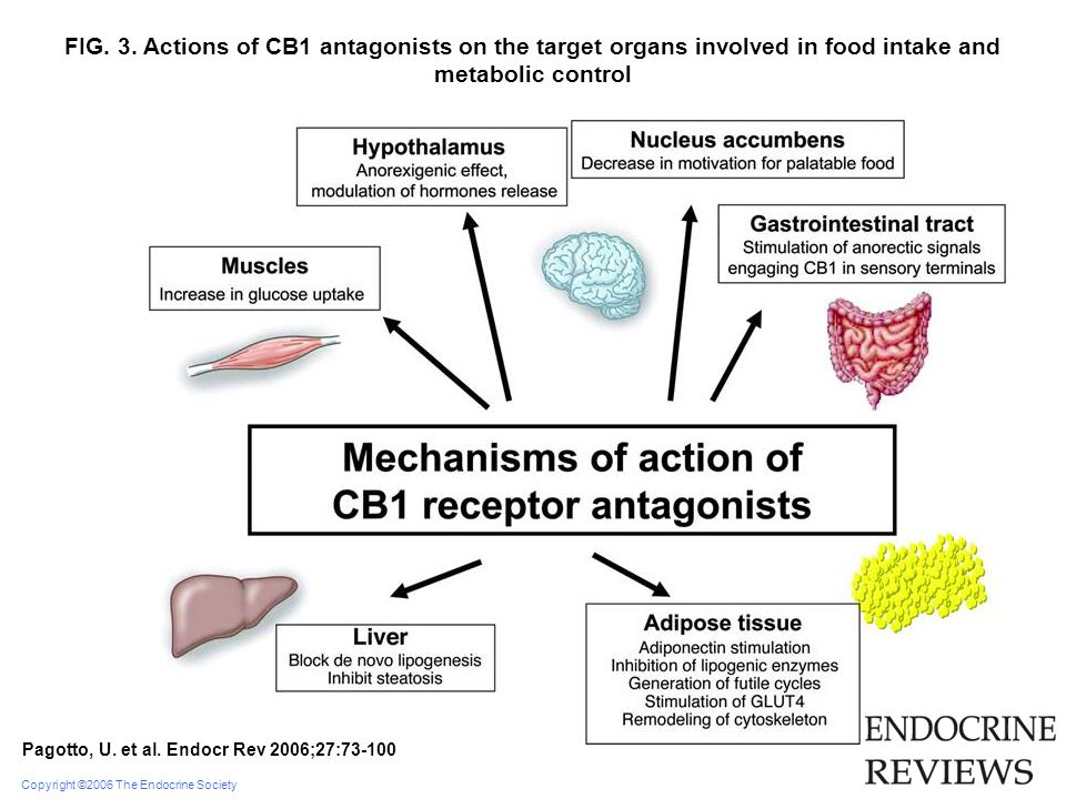 FIG. 3. Actions of CB1 antagonists on the target organs involved in food intake and metabolic control