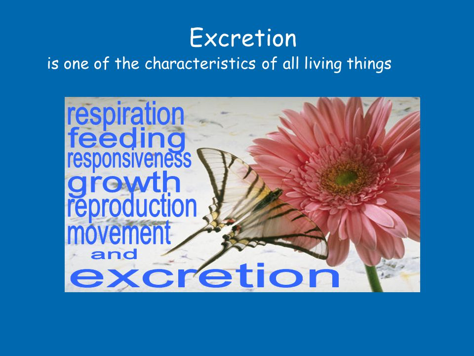 Excretion respiration feeding responsiveness growth reproduction