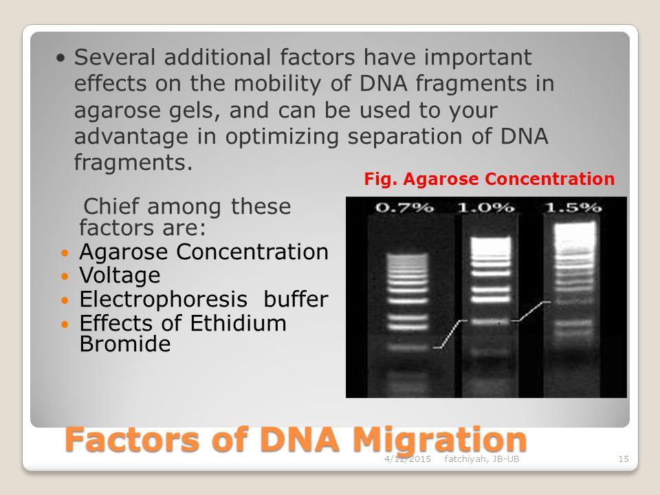 Factors of DNA Migration