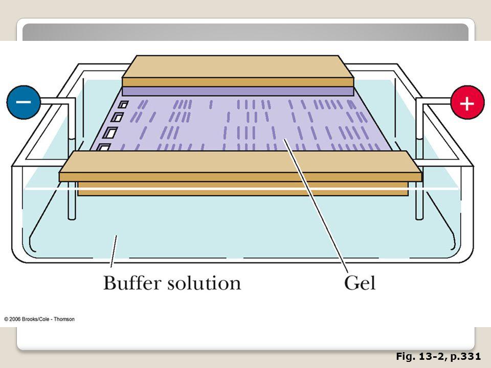 FIGURE 13. 2 The experimental setup for gel electrophoresis