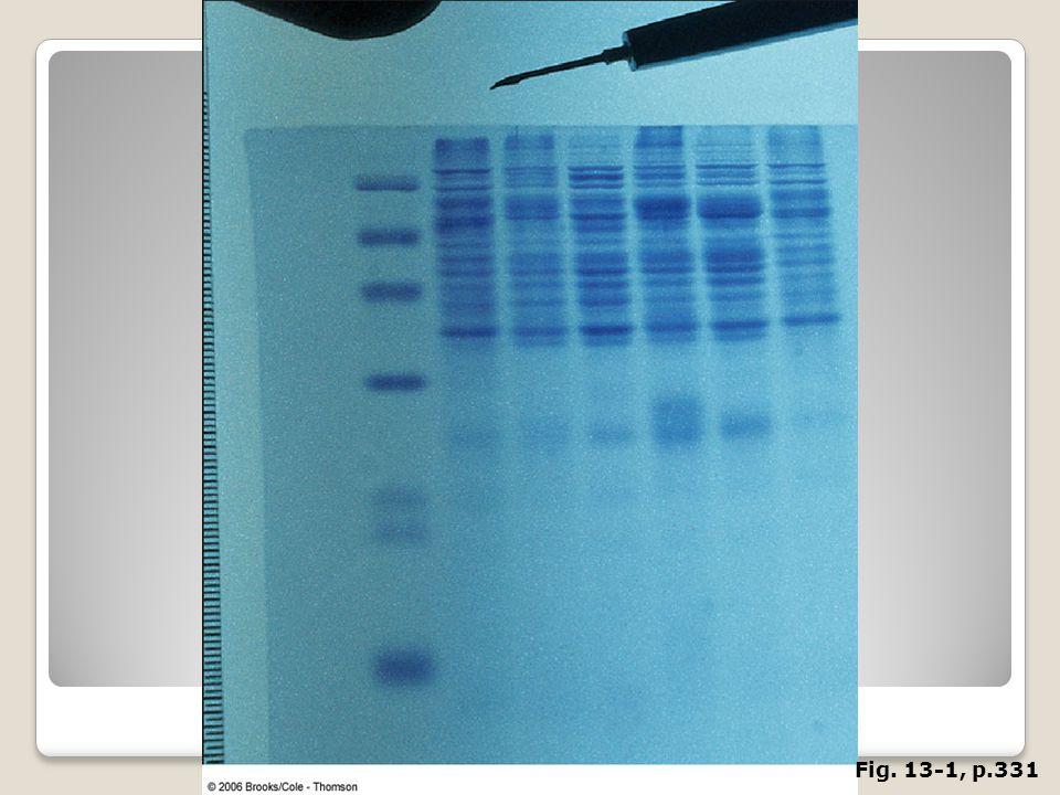 FIGURE 13. 1 Separation of oligonucleotides by gel electrophoresis