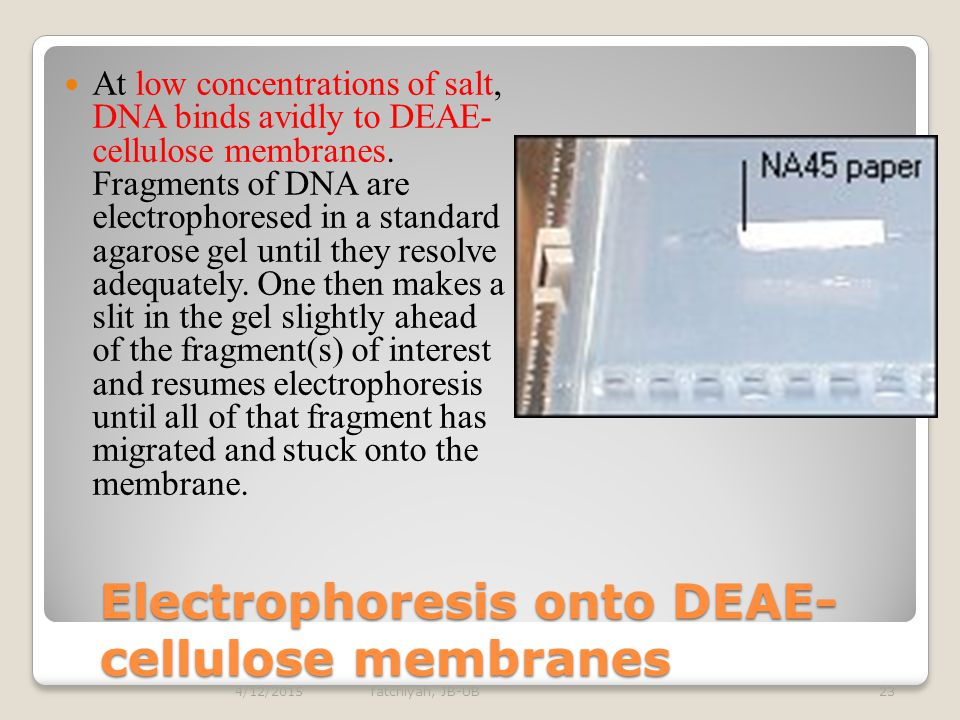 Electrophoresis onto DEAE-cellulose membranes