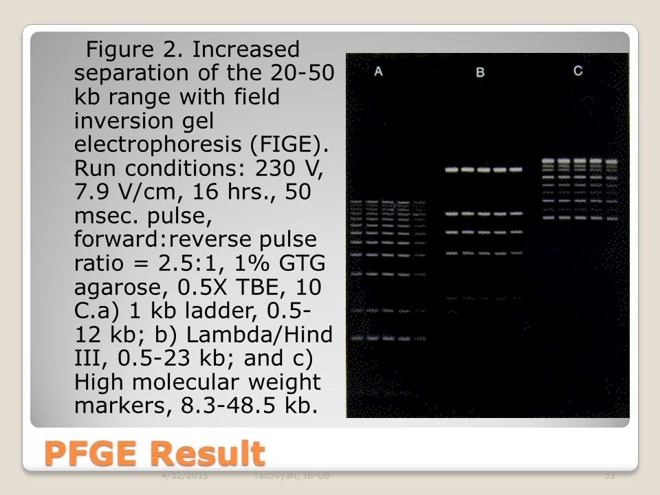 Figure 2. Increased separation of the 20-50 kb range with field inversion gel electrophoresis (FIGE). Run conditions: 230 V, 7.9 V/cm, 16 hrs., 50 msec. pulse, forward:reverse pulse ratio = 2.5:1, 1% GTG agarose, 0.5X TBE, 10 C.a) 1 kb ladder, 0.5-12 kb; b) Lambda/Hind III, 0.5-23 kb; and c) High molecular weight markers, 8.3-48.5 kb.