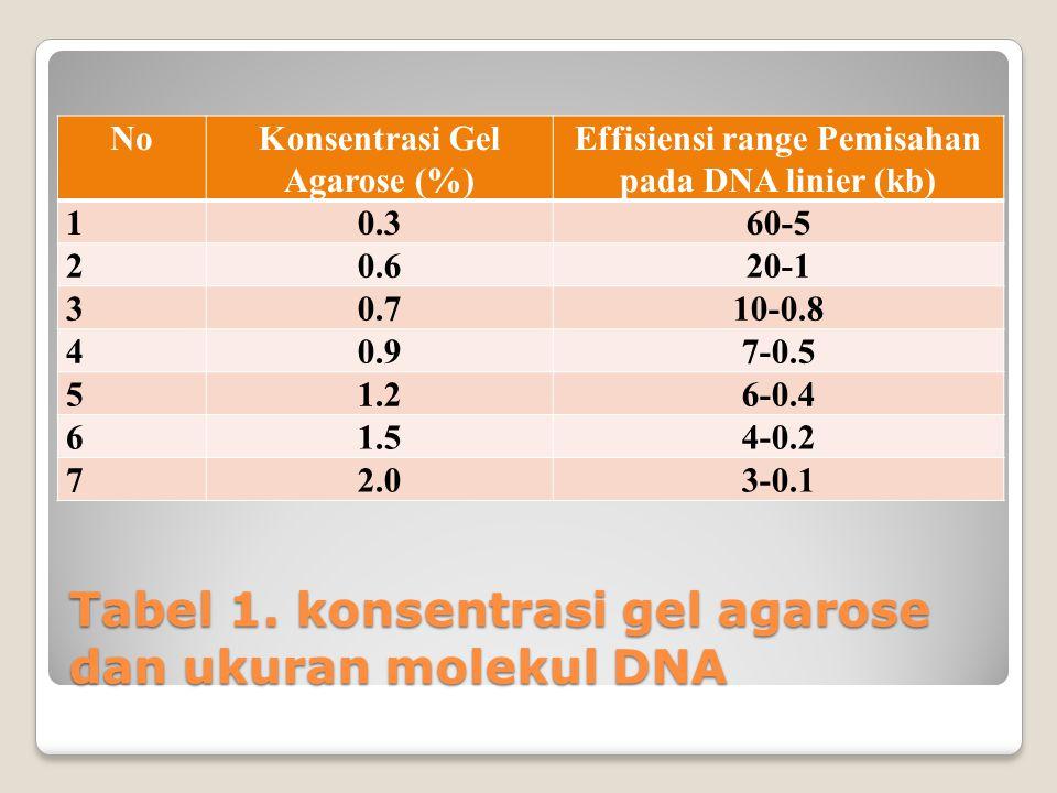 Tabel 1. konsentrasi gel agarose dan ukuran molekul DNA