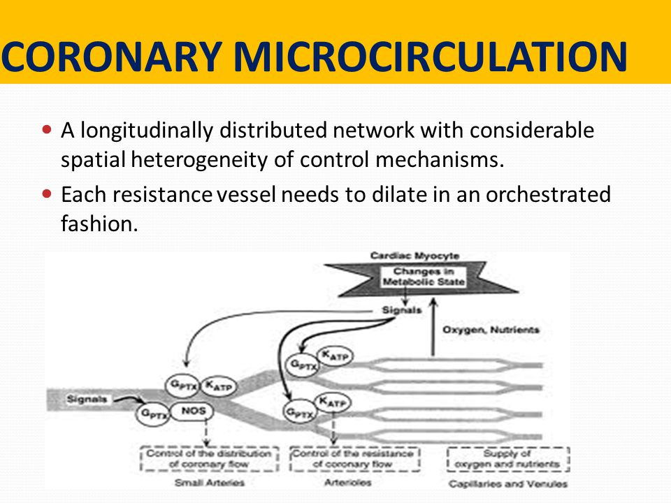 CORONARY MICROCIRCULATION