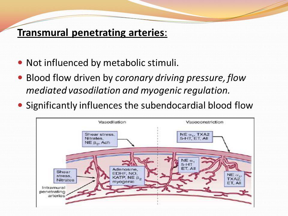 Transmural penetrating arteries: