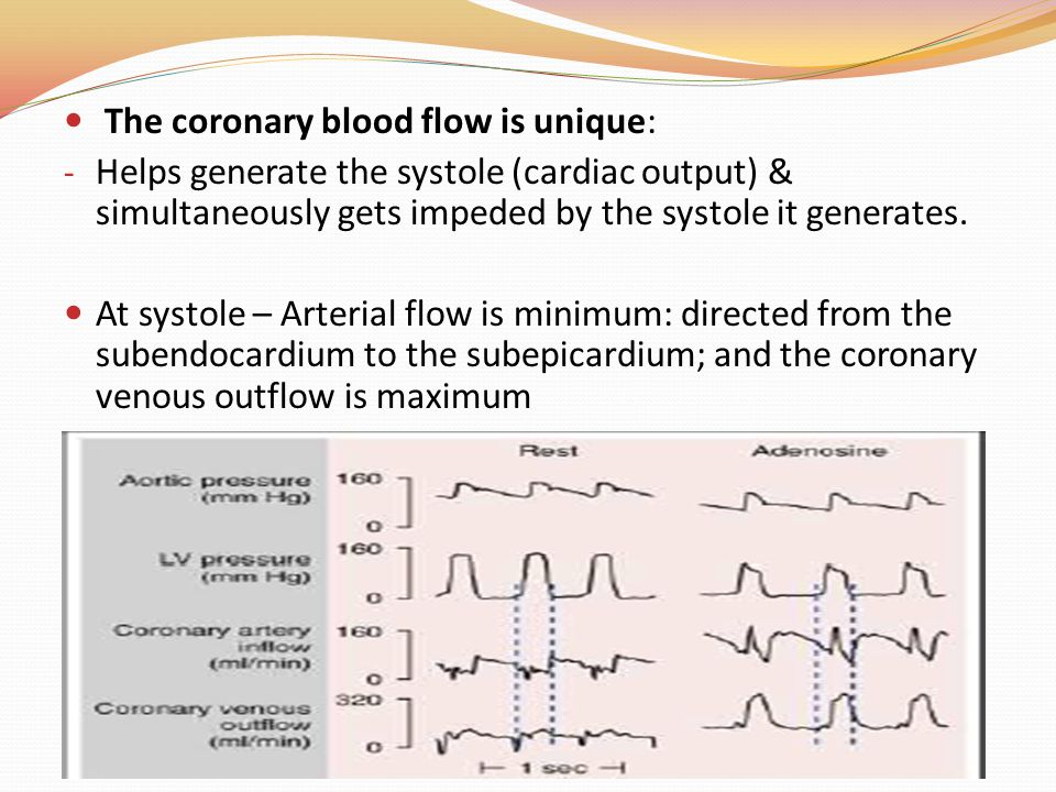 The coronary blood flow is unique: