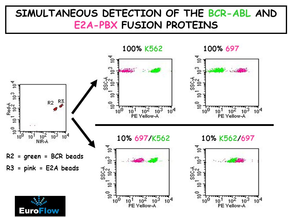 SIMULTANEOUS DETECTION OF THE BCR-ABL AND E2A-PBX FUSION PROTEINS