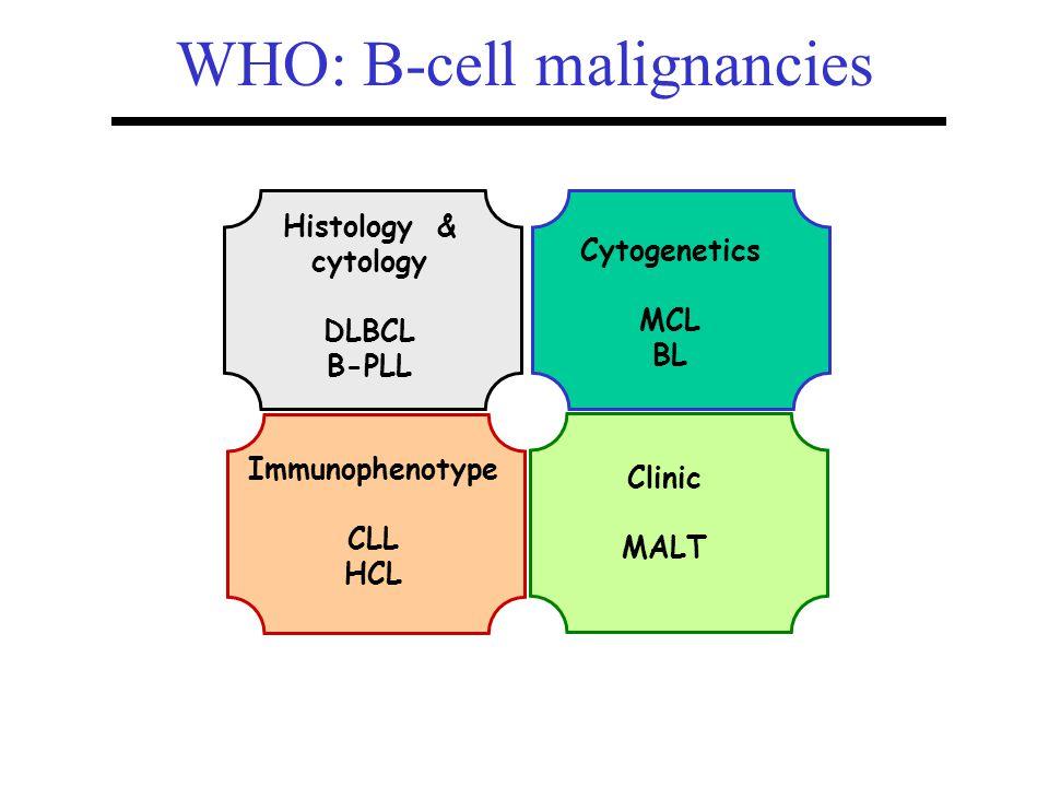 WHO: B-cell malignancies