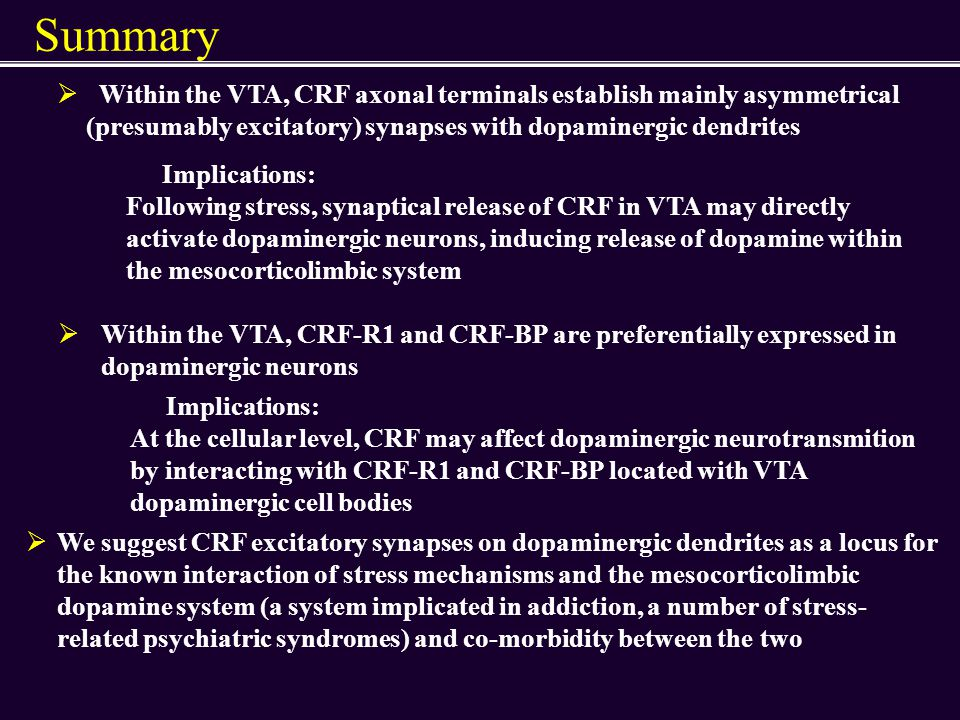 Summary Within the VTA, CRF axonal terminals establish mainly asymmetrical (presumably excitatory) synapses with dopaminergic dendrites.