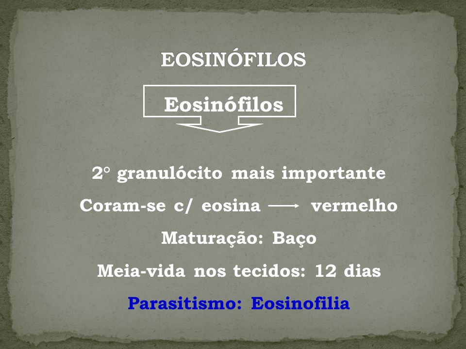 EOSINÓFILOS Eosinófilos 2° granulócito mais importante