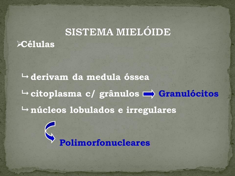 SISTEMA MIELÓIDE Células  derivam da medula óssea