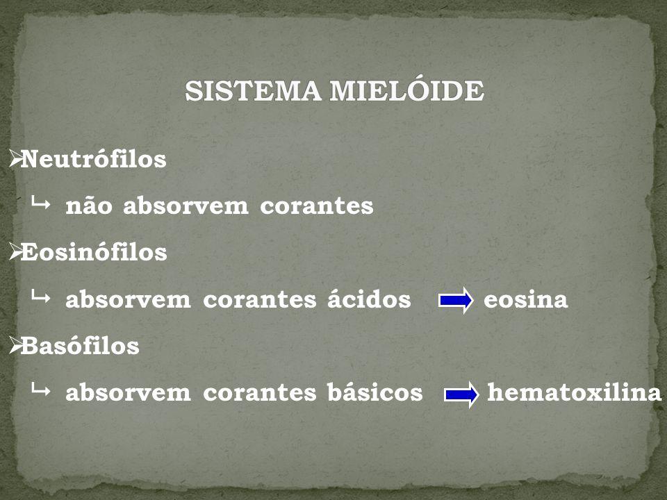 SISTEMA MIELÓIDE Neutrófilos  não absorvem corantes Eosinófilos