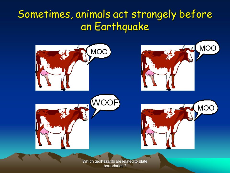 Sometimes, animals act strangely before an Earthquake