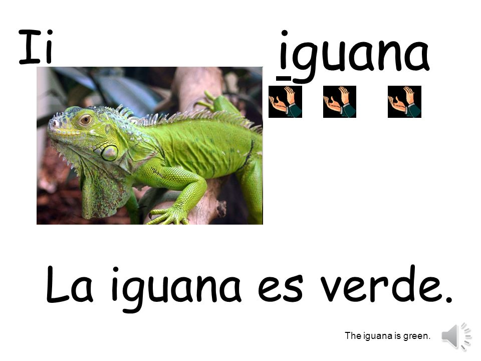 Ii iguana La iguana es verde. The iguana is green.